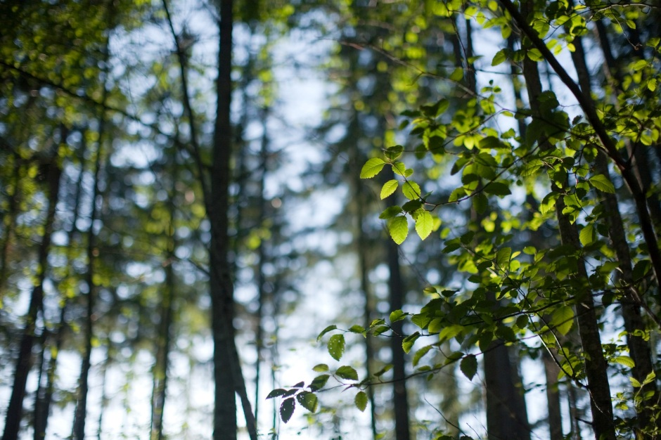 Alder leaves © 2010 Kevin Horan