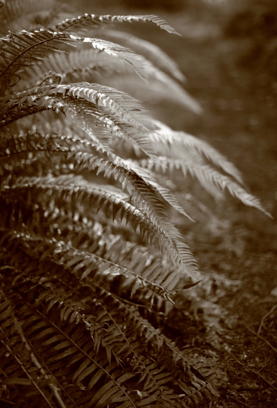 Sword fern waterfall © 2010 Kevin Horan